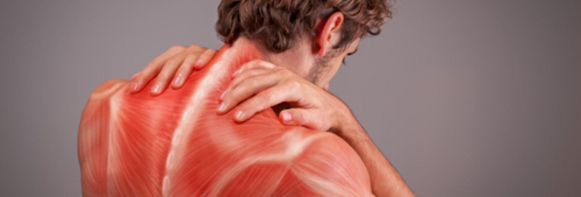 Muskel og skjelettplager